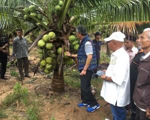 KDYMM Pemangku Raja Pahang Tinjau Operasi Ladang dan Kilang Kelapa (11)