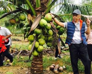 KDYMM Pemangku Raja Pahang Tinjau Operasi Ladang dan Kilang Kelapa (26)