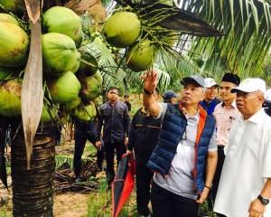 KDYMM Pemangku Raja Pahang Tinjau Operasi Ladang dan Kilang Kelapa (28)