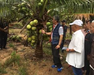 KDYMM Pemangku Raja Pahang Tinjau Operasi Ladang dan Kilang Kelapa (8)